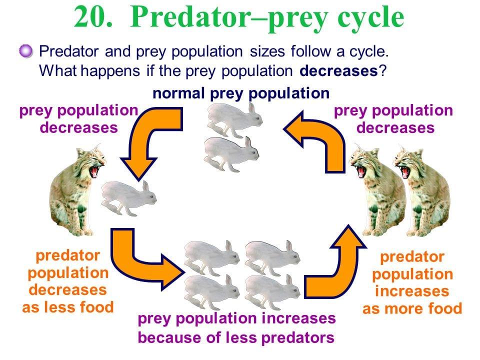 Predator-prey-balance-of-nature