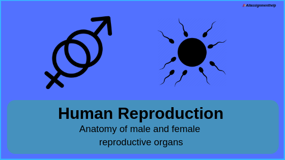 Human Reproduction System an Introduction