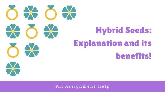 Hybrid Seeds: Explanation and its benefits!