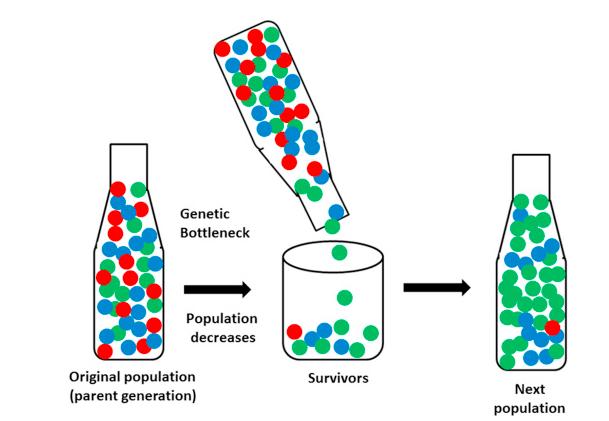 genetic bottleneck